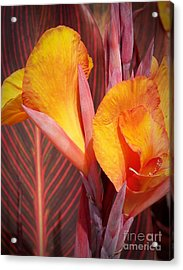 Up Close And Personal Acrylic Print by Chalet Roome-Rigdon