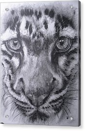 Up Close Clouded Leopard Acrylic Print by Barbara Keith