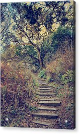 Up We Go Acrylic Print by Laurie Search