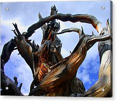 Uprooted Beauty Acrylic Print by Shane Bechler