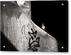 Urban Dweller Acrylic Print by Matthew Blum