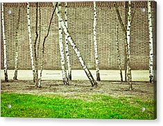 Urban Woodland Acrylic Print by Tom Gowanlock