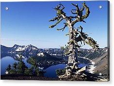 Usa, Crater Lake National Park Oregon Acrylic Print by Greg Vaughn