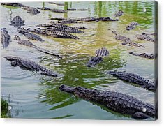Usa, Florida, Ochopee Acrylic Print by Charles Crust