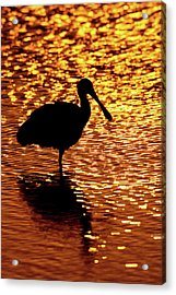 Usa, Florida, Vierra Wetlands Acrylic Print by Jaynes Gallery