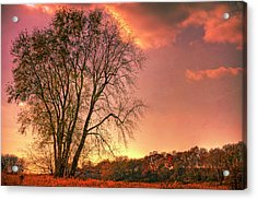 Usa, Indiana Giant Tree In Prophetstown Acrylic Print by Rona Schwarz