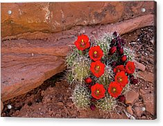 Usa, Utah, Cedar Mesa Acrylic Print by Charles Crust