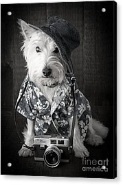 Vacation Dog With Camera And Hawaiian Shirt Acrylic Print by Edward Fielding