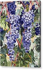 Valley Vines Acrylic Print by Gael Graysen