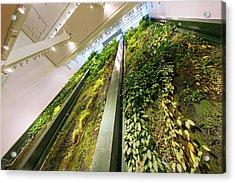Vertical Garden Acrylic Print by Louise Murray