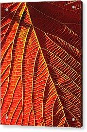 Vibrant Viburnum Acrylic Print by Bill Caldwell -        ABeautifulSky Photography