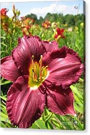 Viette's Daylily. Dark Purple 01 Acrylic Print by Ausra Huntington nee Paulauskaite