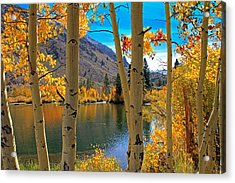 View Through The Aspens Acrylic Print by Donna Kennedy
