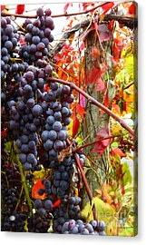 Vines Of October Acrylic Print by Roger Bailey