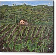 Vineyard In Neuchatel Acrylic Print by Felicia Tica