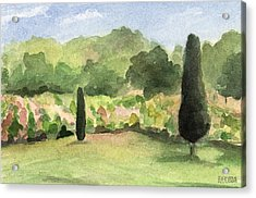 Vineyard In Provence Watercolor Paintings Of France Acrylic Print by Beverly Brown Prints