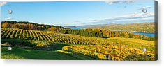 Vineyard, Keuka Lake, Finger Lakes, New Acrylic Print by Panoramic Images