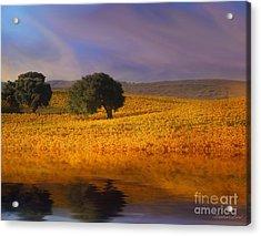 Vineyard Magic Acrylic Print by Stephanie Laird