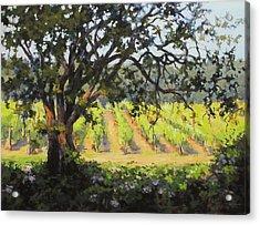 Vineyards Edge Acrylic Print by Karen Ilari