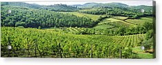 Vineyards In Chianti Region, Tuscany Acrylic Print by Panoramic Images