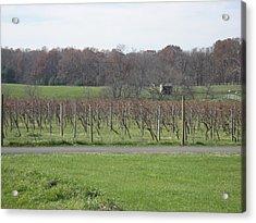 Vineyards In Va - 121234 Acrylic Print by DC Photographer