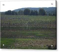 Vineyards In Va - 121255 Acrylic Print by DC Photographer
