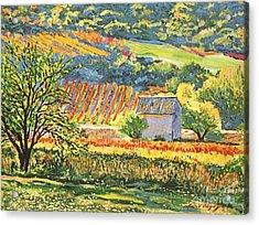 Vineyards Of Provence Acrylic Print by David Lloyd Glover