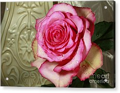 Vintage Beauty Rose Acrylic Print by Inspired Nature Photography Fine Art Photography