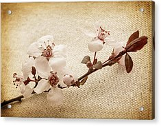 Vintage Blossoms Acrylic Print by Caitlyn  Grasso