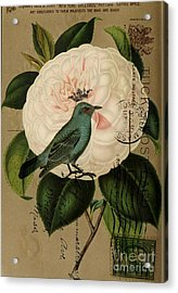 Vintage French Botanical Art Pink Rose Teal Bird Acrylic Print by Cranberry Sky