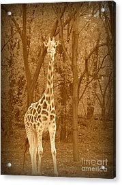 Vintage Giraffe Acrylic Print by Avis  Noelle