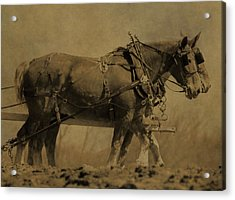 Vintage Horse Plow Acrylic Print by Dan Sproul