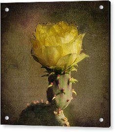 Vintage Yellow Cactus Acrylic Print by Sandra Selle Rodriguez