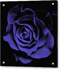 Abstract Blue Roses Flowers Art Work Photography Acrylic Print by Artecco Fine Art Photography