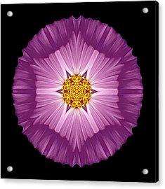 Violet Cosmos II Flower Mandala Acrylic Print by David J Bookbinder
