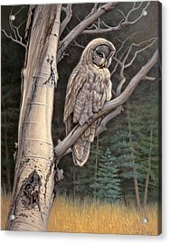 Visitor From The North-great Grey Owl Acrylic Print by Paul Krapf