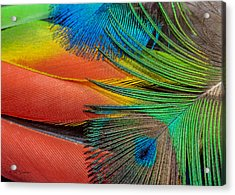 Vivid Colored Feathers Acrylic Print by Jeff Swanson