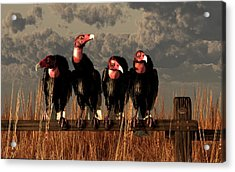 Vultures On A Fence Acrylic Print by Daniel Eskridge