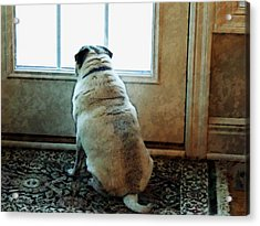 Waiting... Acrylic Print by Michael Stowers