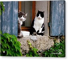 Waiting For Dinner Acrylic Print by Lainie Wrightson