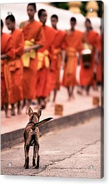 Waiting For Master Acrylic Print by Justin Albrecht