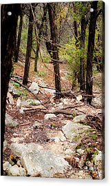 Walk In The Woods Acrylic Print by Barbara Shallue