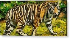Walk The Tiger Acrylic Print by Georgi Dimitrov
