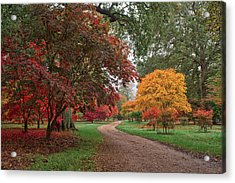 Walk Through The Colours.  Acrylic Print by Shirley Mitchell