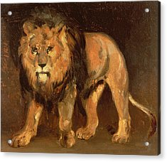 Walking Lion Acrylic Print by Theodore Gericault