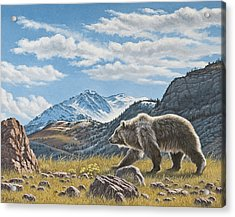 Walking The Ridge - Grizzly Acrylic Print by Paul Krapf