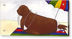 Walrus At The Beach Acrylic Print by Christy Beckwith