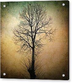 Waltz Of A Tree Acrylic Print by Taylan Soyturk