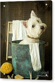 Wash Day Acrylic Print by Edward Fielding