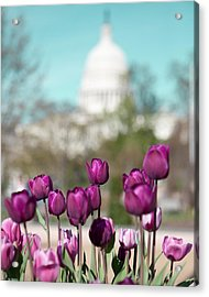 Washington Dc Acrylic Print by Kim Fearheiley